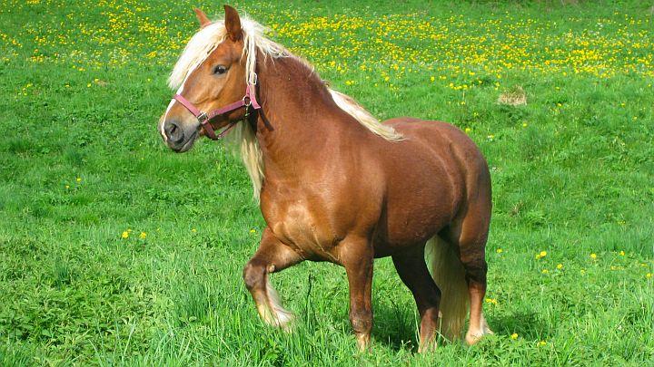 Ferienwohnungen Stalleg Pferde1