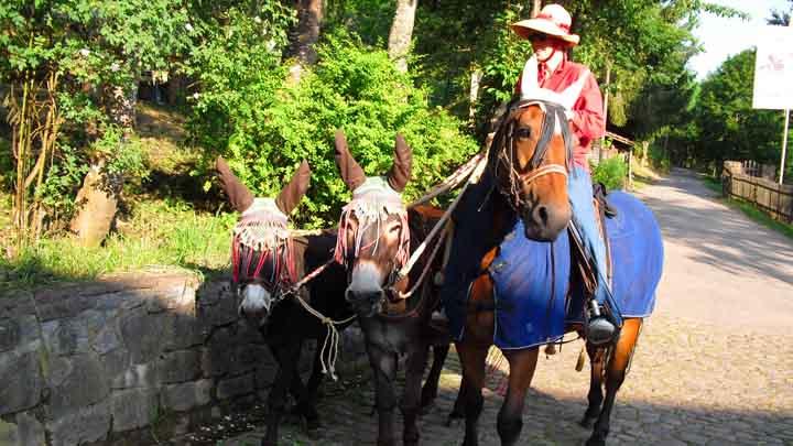 3 Wanderreiter mit Esel