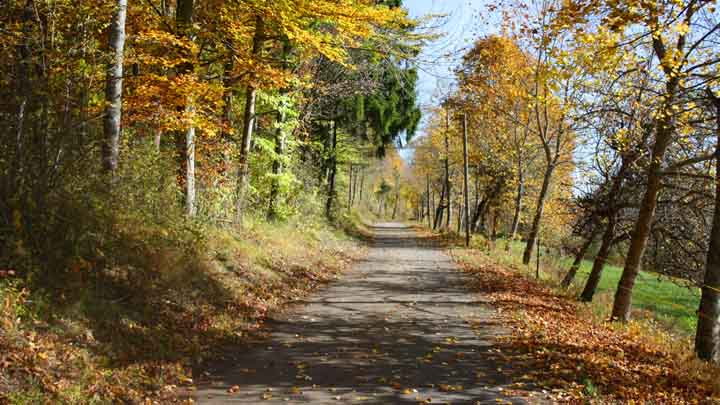 Stallegg Zufahrtsweg Herbst